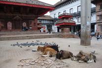 Nepal67