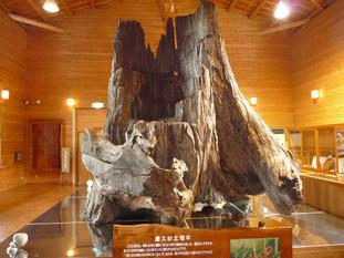 Yakushima19